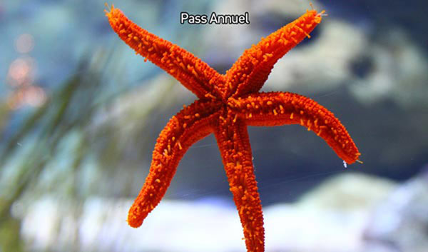 AQUARIUM DE PARIS - PASS ANNUEL