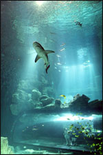 Affiche Aquarium de paris