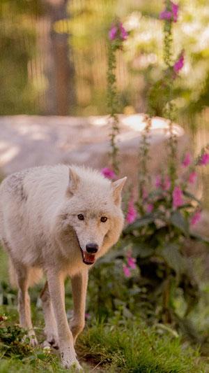 PARC ANIMALIER DE COURZIEU PARC DE COURZIEU visite de parc animalier