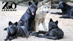 ZOO DE LABENNE Zoo de Labenne visite de parc animalier