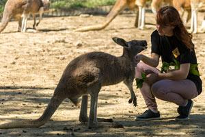LE PARC AUSTRALIEN Le Parc Australien visite de parc animalier